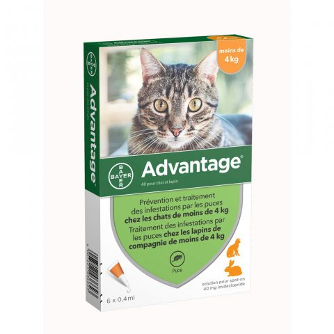 Advantage petit chat 6 pipettes
