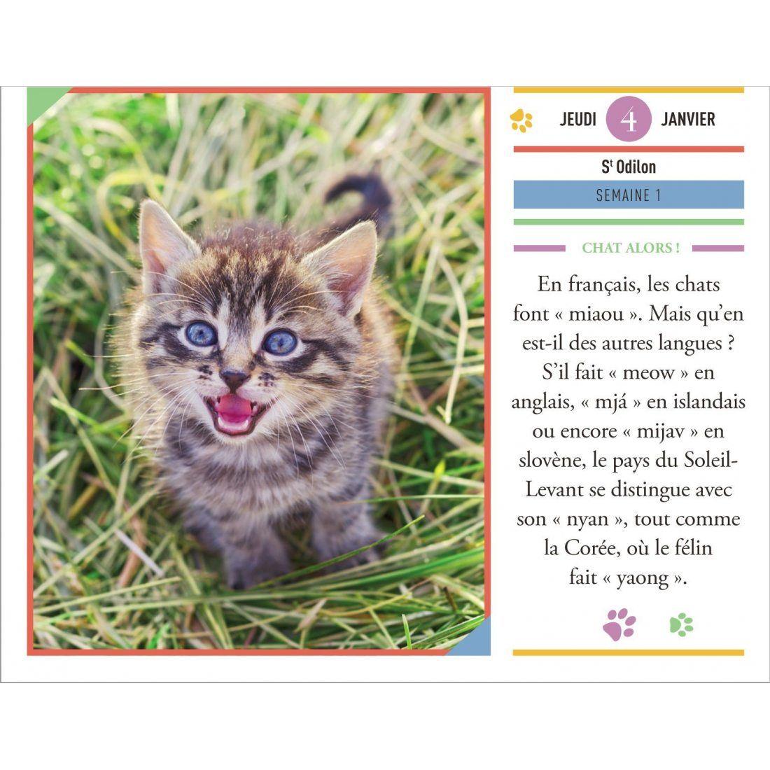 CALENDRIER - Almaniak Pensées pour les amoureux des chats 2018