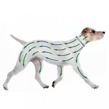 Seresto Collier antiparasitaire pour petits chiens moins de 8 Kg