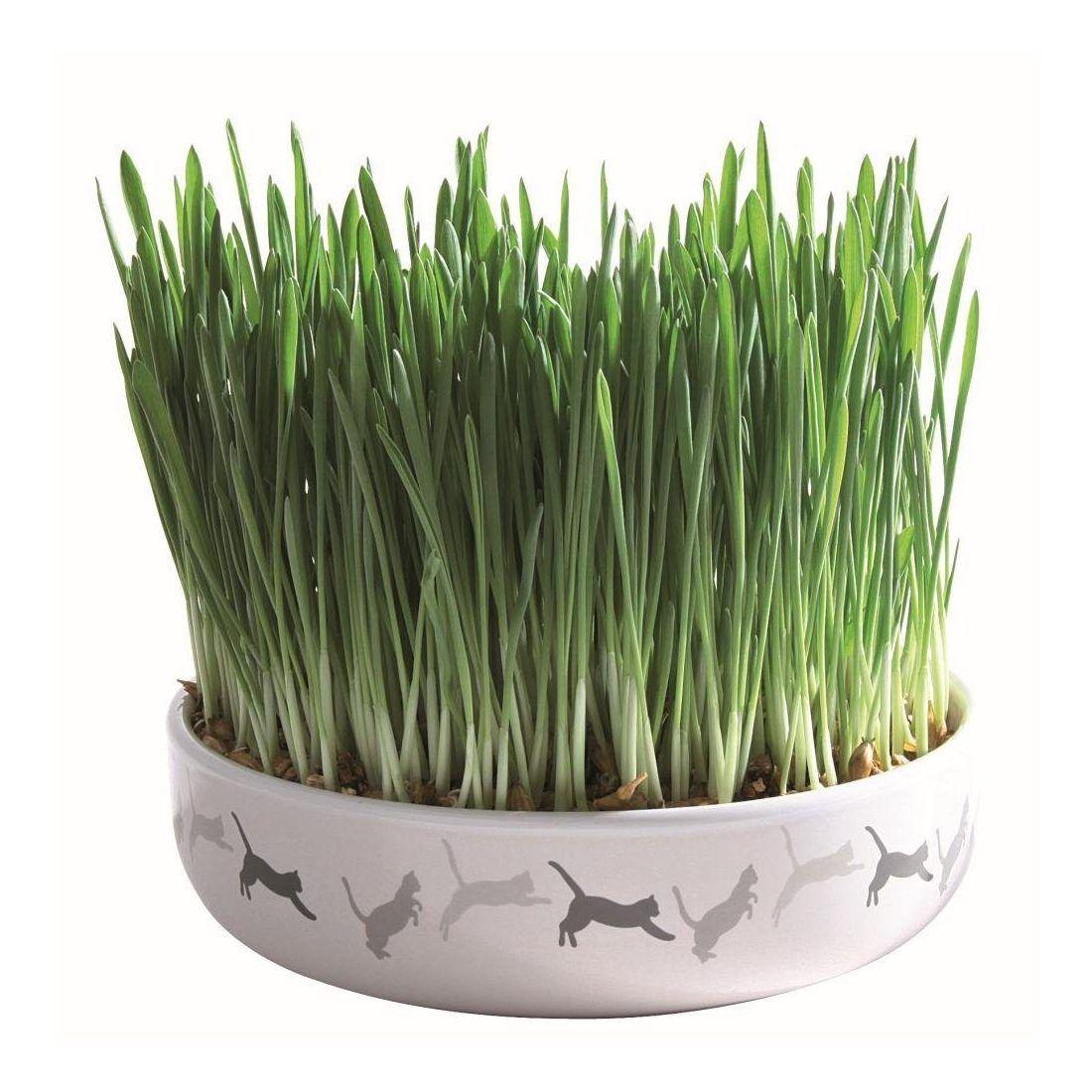 Trixie 42341Coque en céramique pour chat herbe