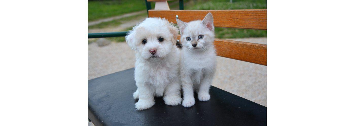 Ventes discount d'accessoires pour vos animaux